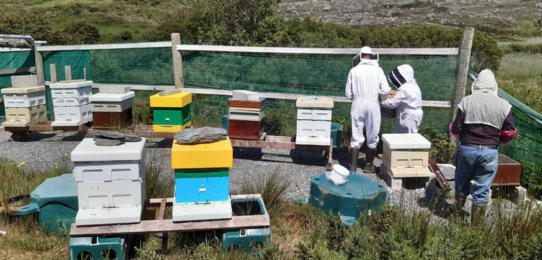 FABKA West Cork apiary