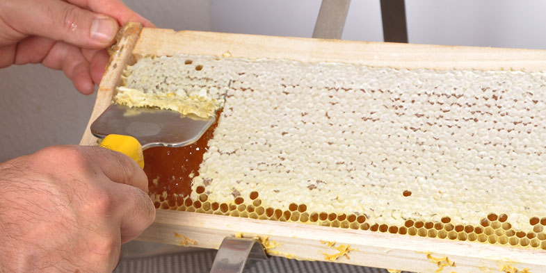 Uncapping a honey frame with an uncapping fork